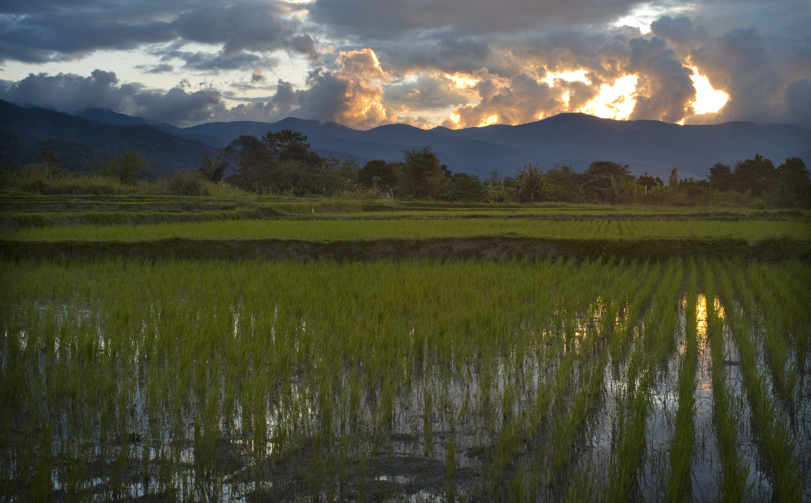 improved-rice-cultivation-hero-natural-climate-solutions-the-nature-conservancy