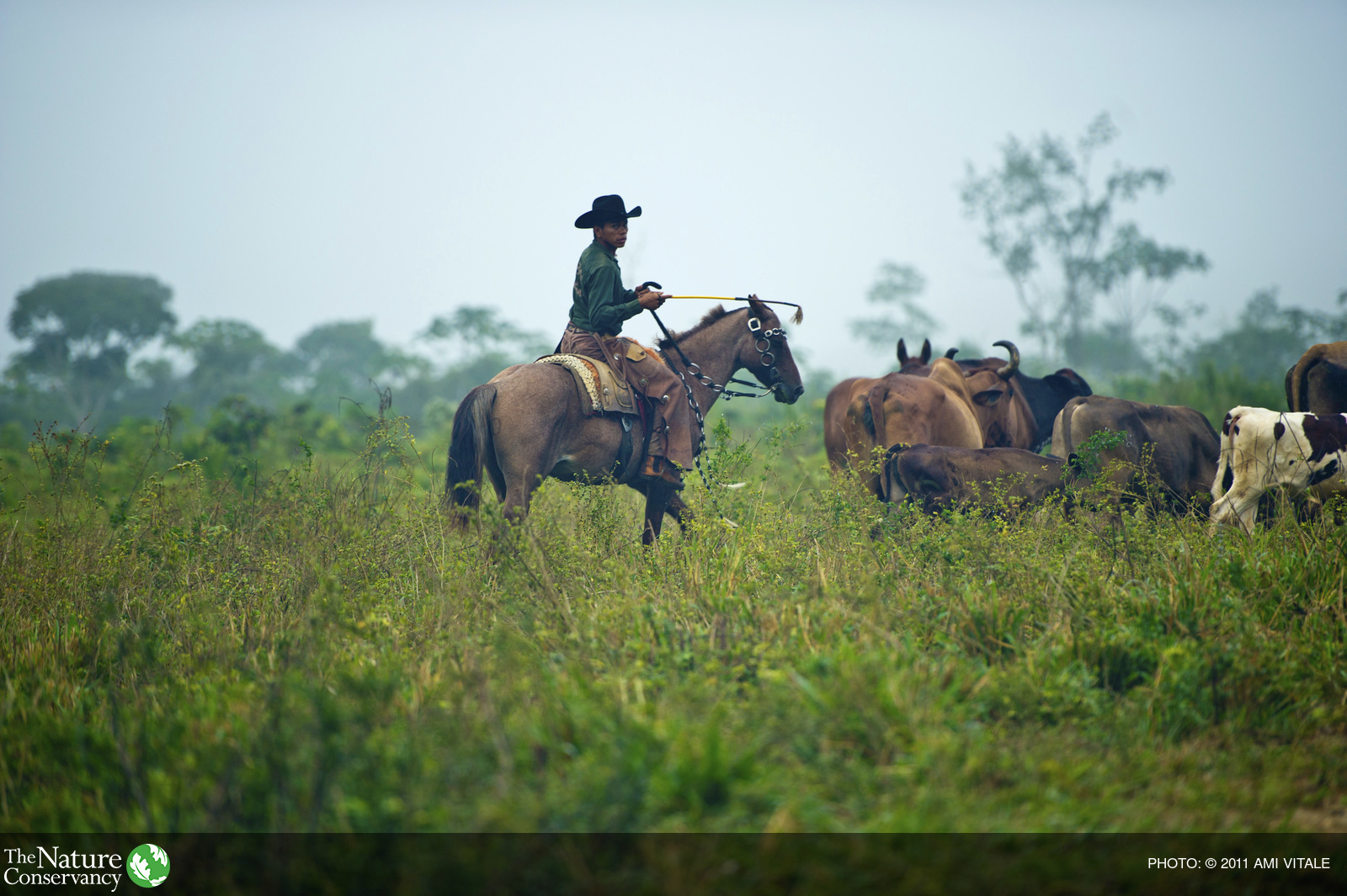 Joao Batista Dos Santos Fortado herds cattle on the Ponderosa  farm in Paragominas-Pará, a municipality in the Brazilian Amazon. Understanding that conversion to agriculture and cattle ranching is the greatest threat to the Amazon rainforest, the Conserv