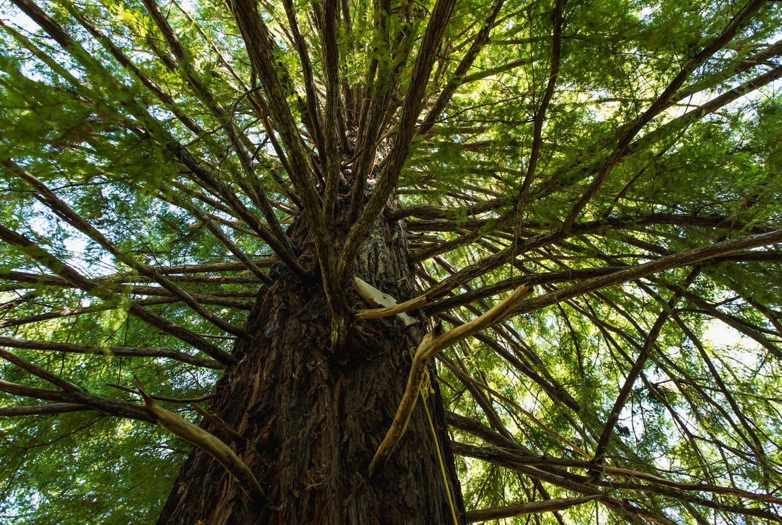Forests acquired by the Yurok Tribe by using the profits on the sale of forest carbon offsets.